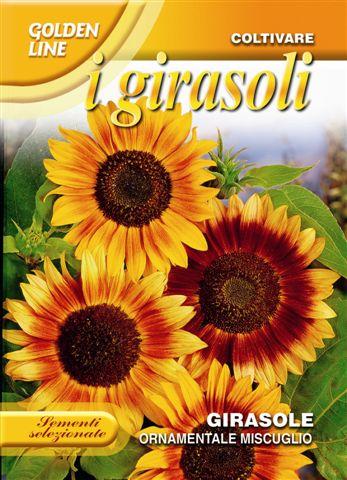 Sunflower ornamentale multicolor
