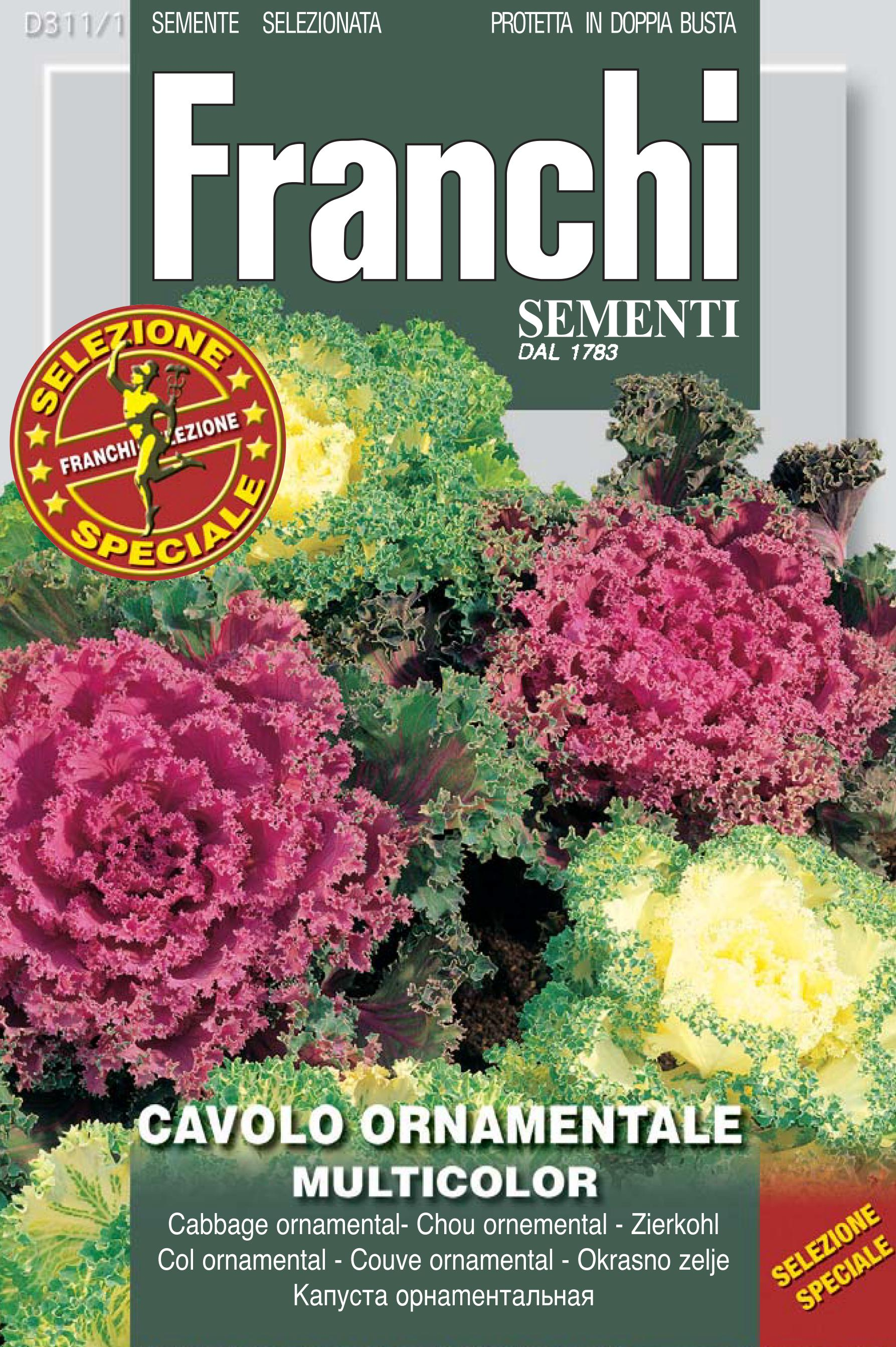 Cavolo ornamentale - Ornamental cabbage