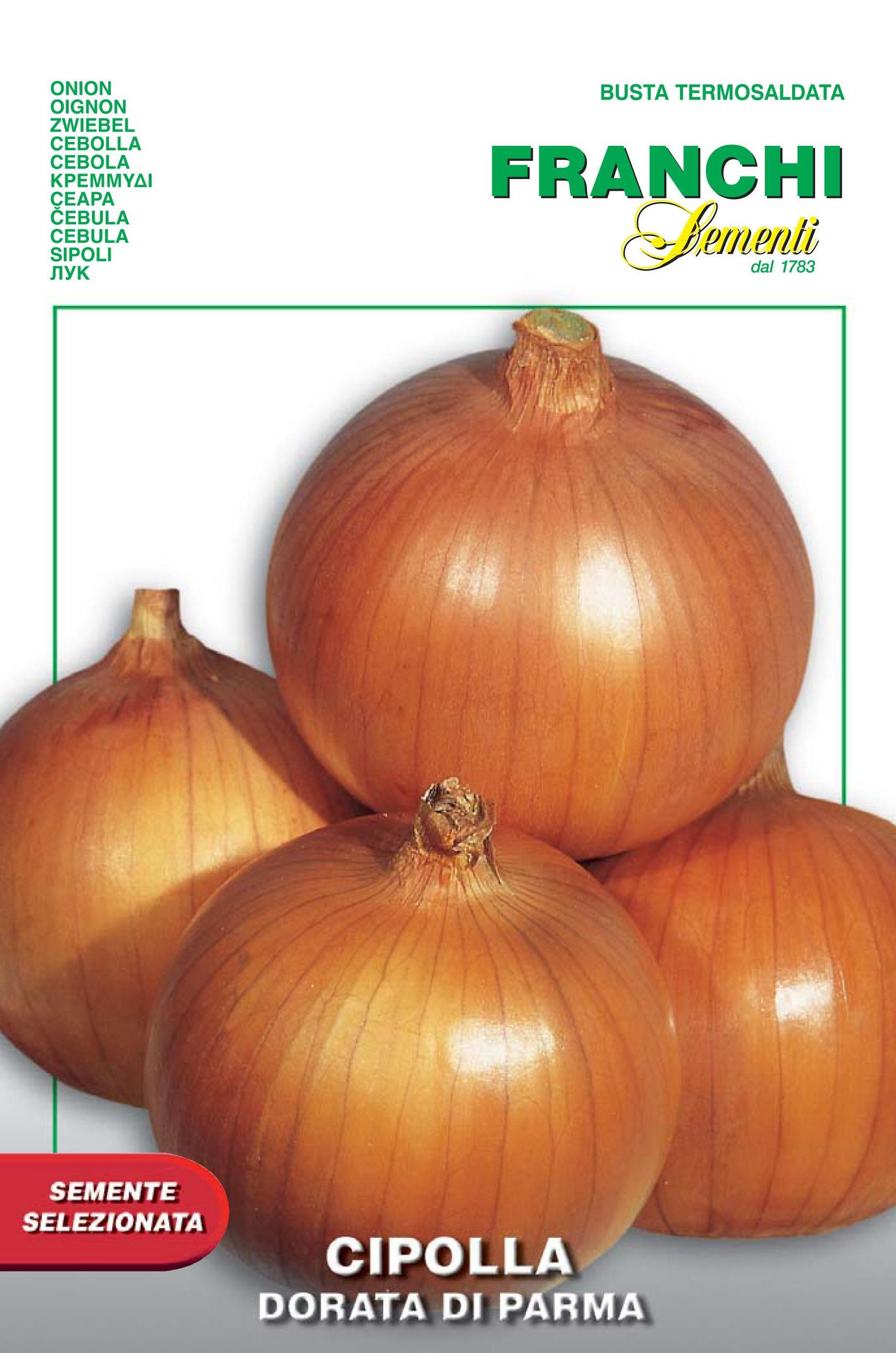 Onion Dorata Di Parma (A) Allium cepa L.