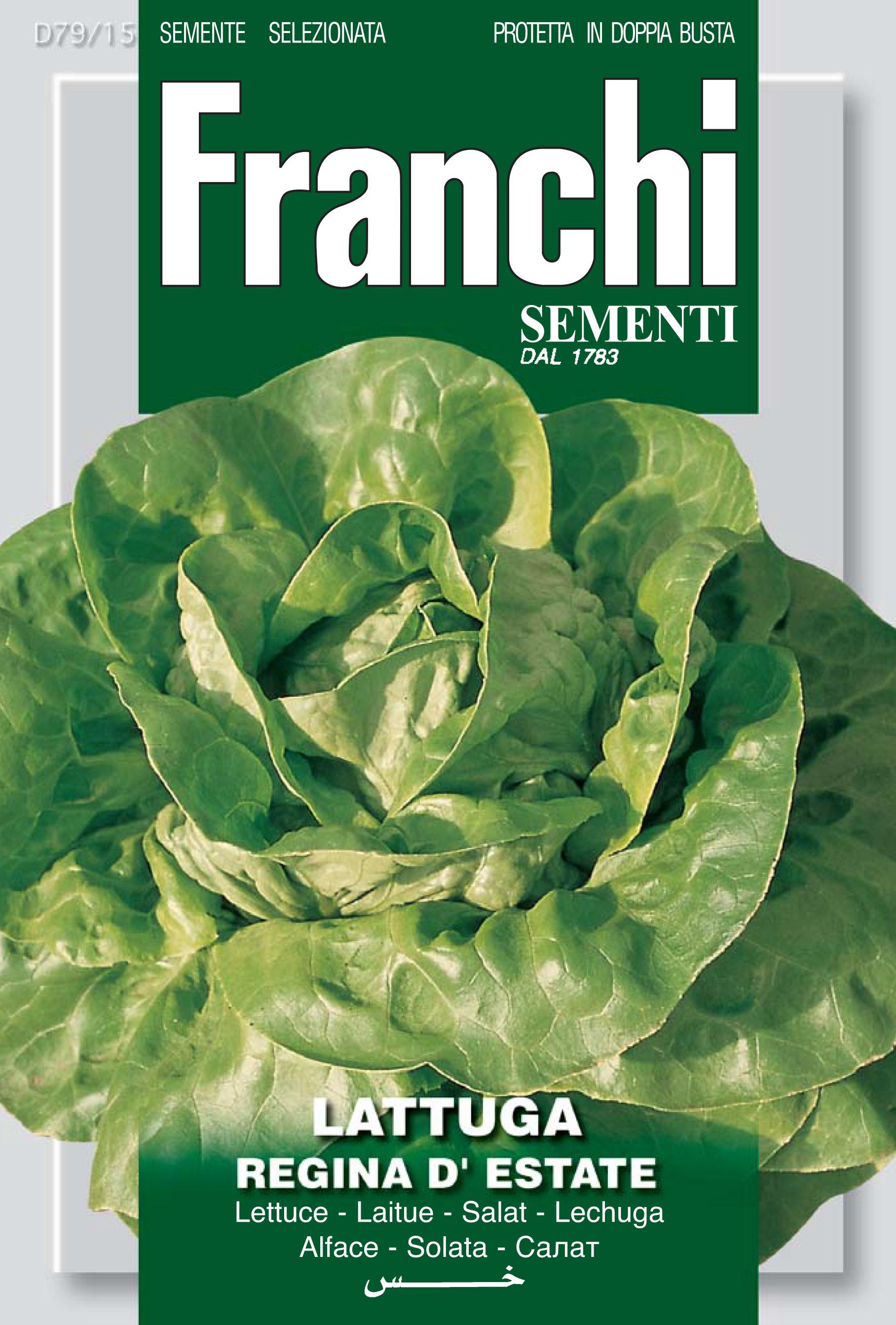 Lettuce Regina D'Estate