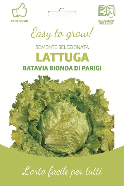 Easy Batavia Lettuce