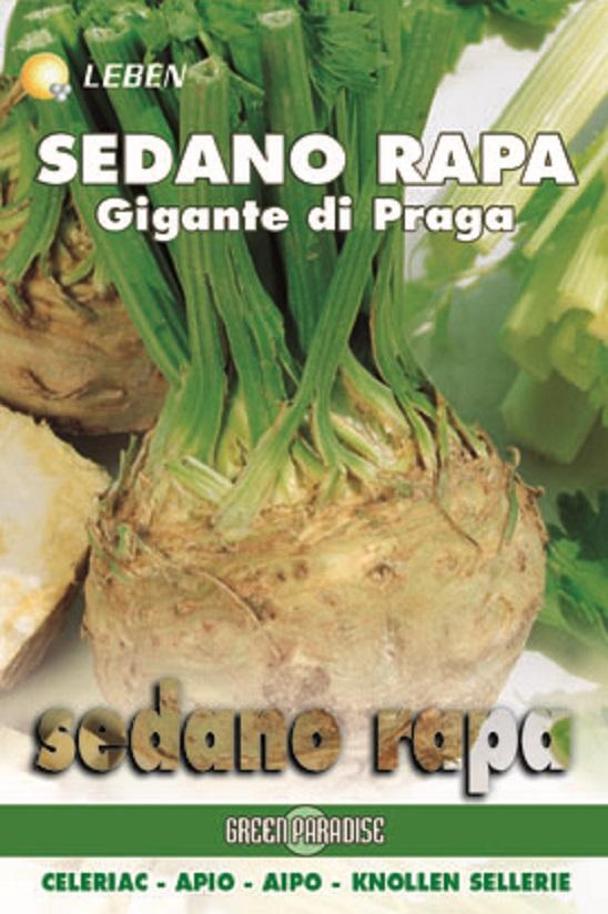 Celeriac – Sellerie Prager Reuzen Leben
