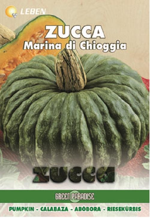 Pumpkin – Kurbis Marina Chioggia Leben