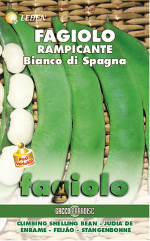 Butterbean Stangenbohne Spagna Bianco (A) Phaseolus coccineus L.