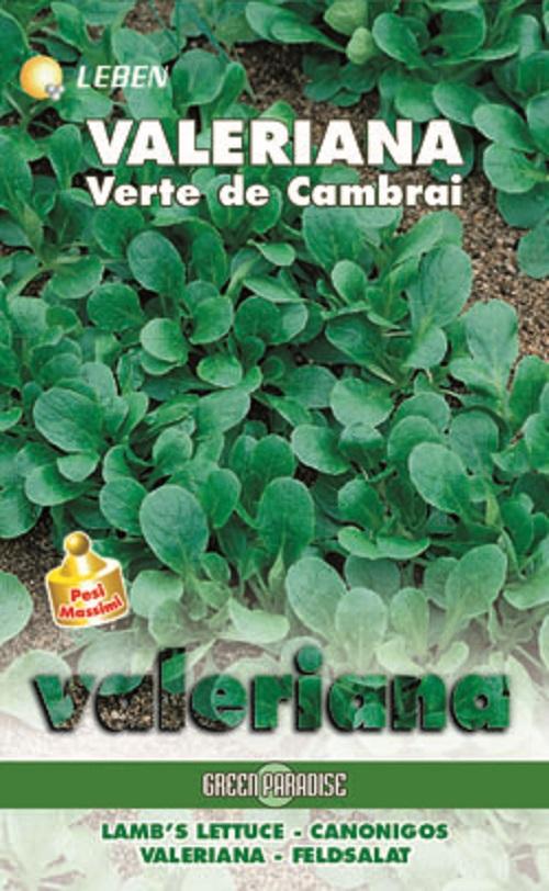 Lambs Lettuce – Feldsalad Verte Cambrai Leben