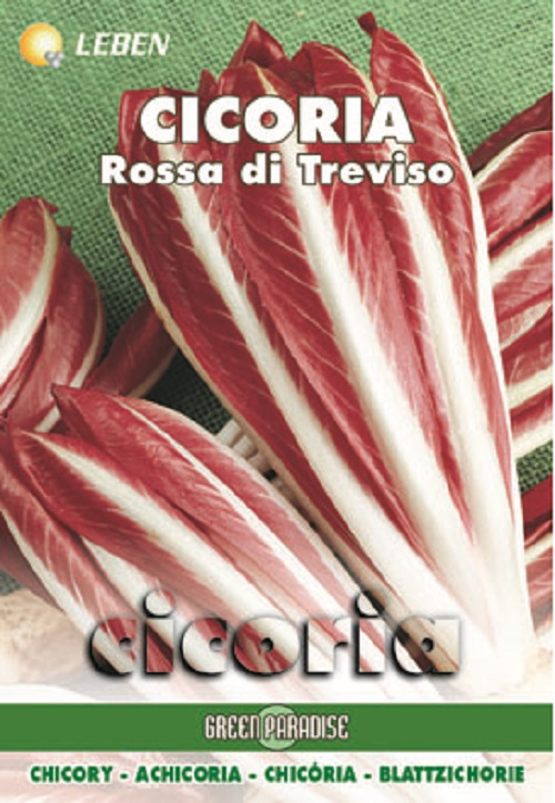 Radicchio – Blattzichorie Rossa Treviso 2 Leben