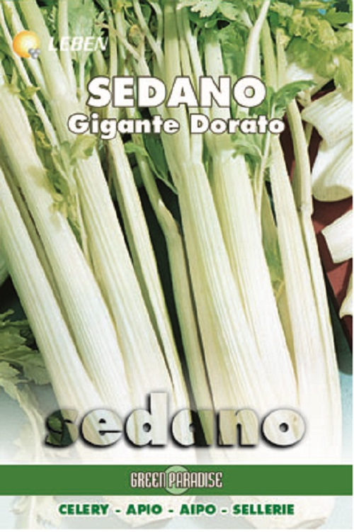 Celery - Sellarie Dorato D'Asti Leben