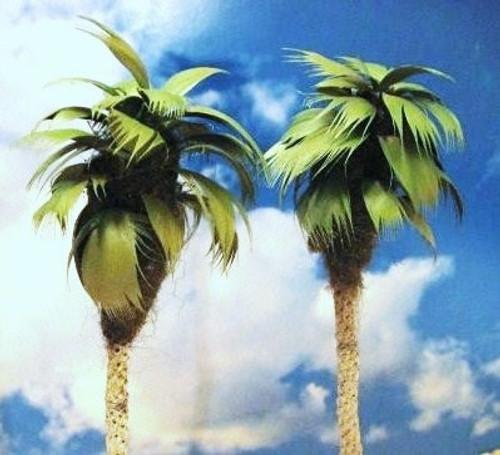 "Grand Central Gems T25 Medium Palm Trees, 5-6"" (2)"