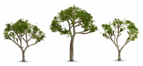 "Woodland Scenics TR3525 Gum Trees, 2-1/2"" to 3-1/2"" (3)"