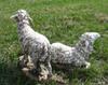 sheep set outdoor nativity scene