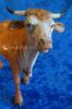 "Ox Standing - 12"" Fontanini Nativity Animal 52930"