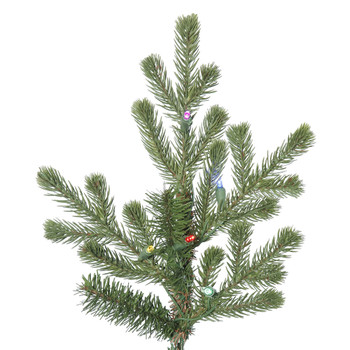 Lexington Spruce