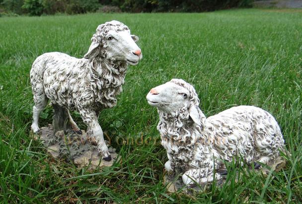 outdoor nativity sheep