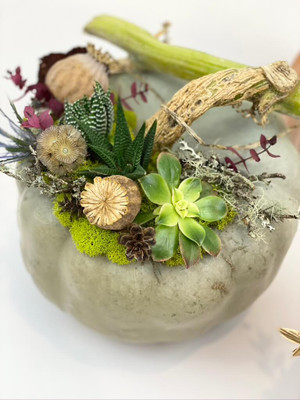 Designer pumpkins take the stage with the addition of succulents, moss, and dried botanicals