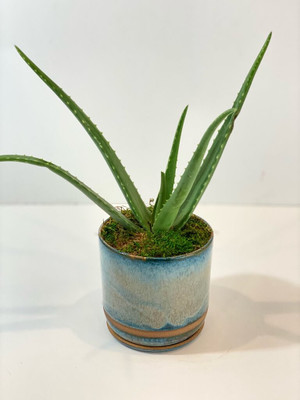 Aloe Vera plant easy care minimal water for seattle flower delivery high quality plants by Juniper Flowers Pottery by local artist Teal Stannard