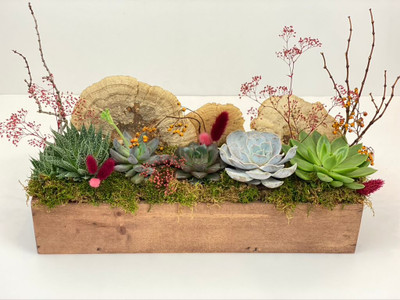 "succulent variety planted in an 18"" wood box with mosses and natural botanical accents"