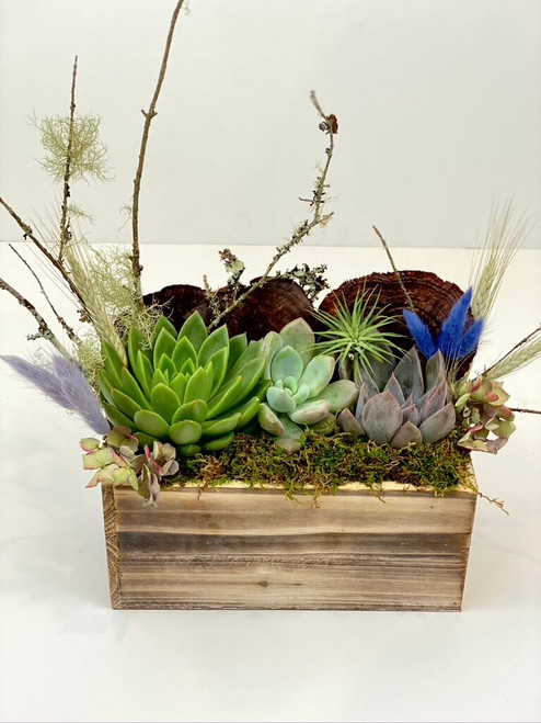 succulent trio variety planted in a wood box with mosses and natural botanical accents
