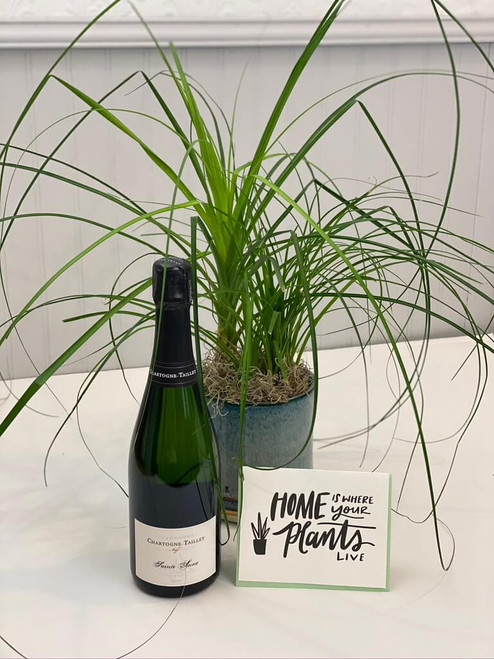 Rooted. An easy package deal : beautiful potted green plant, bottle of your choice and a letterpress card. Ideas for this gift would be housewarming, birthday, congratulations, anniversary or simply thinking of you.Seattle flower delivery by Juniper Flowers