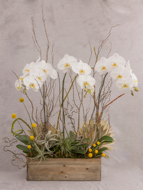 Custom Orchid Planter for Seattle flower delivery by Juniper Flowers. Beautiful white phalaenopsis orchids in a large wood planter box with branches and dried accents.