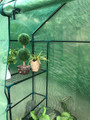 Portable Mini Outdoor Greenhouse with Walk-in 4 Rack Shelf - 56&quot x 29&quot x 77&quot inches