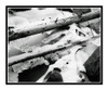 Icy Tree Trunks over a Silky Waterfall in Colorado 61 B&W