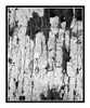 TexD810.CO.Fl.Wall.Paint.2774bw