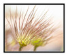 Pasque Flower in a Garden 2815