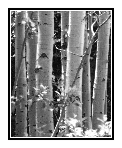 SND200.CO.RMNP.Aspens.1593
