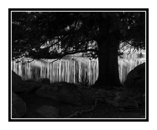 Aspens Trees Framed by Pine Tree at Sprague Lake, Colorado 1571