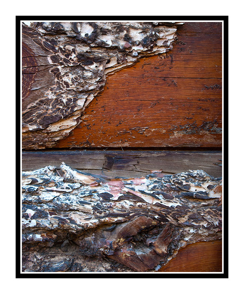 Barnwood Texture Detail, Colorado 2358