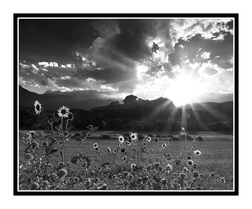 Sunburst & Sunflowers in Garden of the Gods, Colorado 2279 B&W
