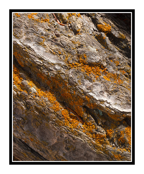Pine Tree Texture in Colorado 2112