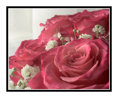 Pink Rose Detail Bathed in Light 2458