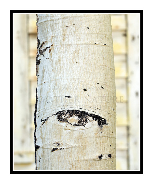 Aspen Trunk Against a Building in Breckenridge, Colorado 1346
