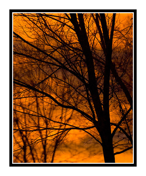 Trees in Silhouette Against an Orange Sunset inColorado Springs, Colorado 1129