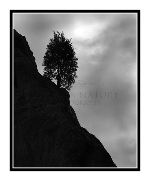 A Lone Tree in Garden of the Gods in Colorado Springs, Colorado 984 B&W