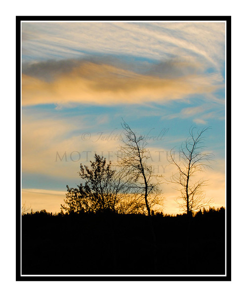 Trees in Silhouette at Sunrise in Wyoming 1069