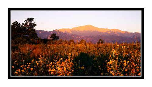 Pike's Peak over Sunflowers in Palmer Park in Colorado Springs, Colorado 49