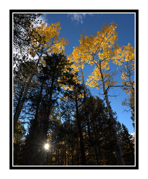 Aspen and Pine Trees in Autumn Mueller State Park, Colorado 2510