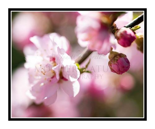 Pink Flower in a Garden 2818