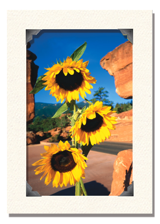 card-frame-with-image-39-cr.jpg