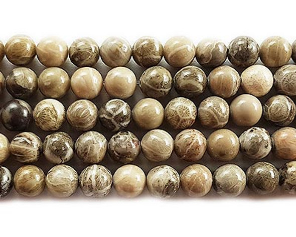10mm Fossil coral jasper round beads