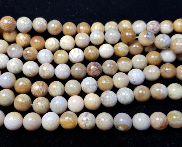 8mm  15.5 inches Fossil coral jasper round beads