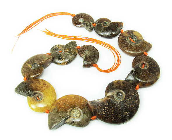 12x14mm - 25x30mm Ammonite Fossil Pieces Graduated Beads