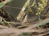 Köhler Explorer Pants - PHANTOMLEAF WASP.II.Z3A from Hessen Antique