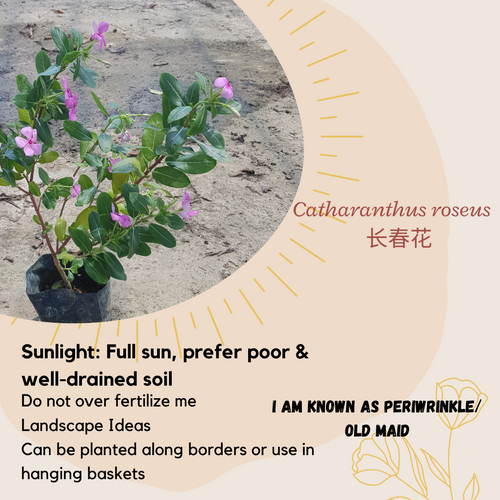 Properties - Catharanthus roseus