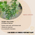 Properties - Aglaia odorata