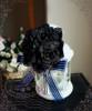 Dark Blue + Black Version