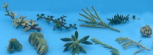 10 Assorted Succulent Cuttings / Transplants / Rooted Cuttings - 10 Different Va