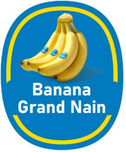 "FlowerPotNursery Banana Grand Nain Banana Musa acuminata Grand Nain 4"" Pot"